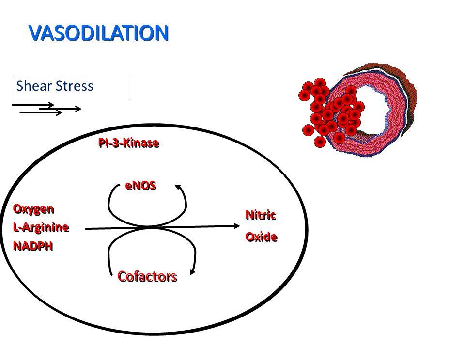 Shear Stress PI-3-Kinase Oxygen L-Arginine NADPH Oxygen L-Arginine NADPH Nitric Oxide Nitric Oxide eNOS Cofactors