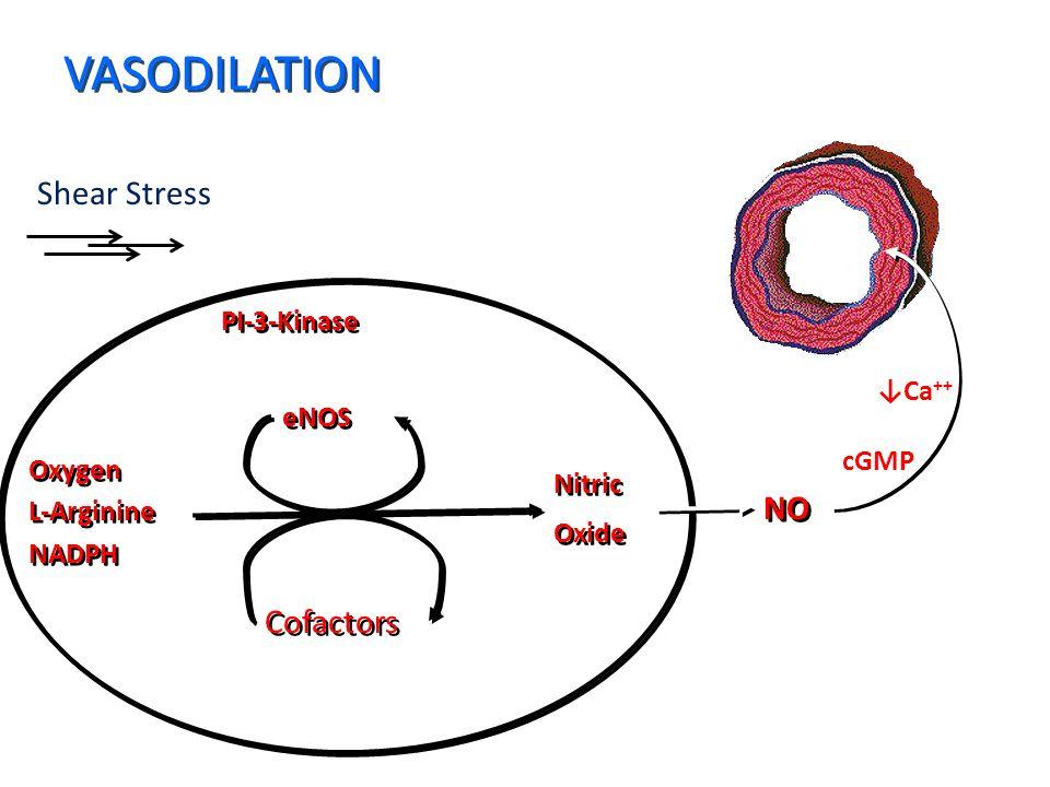 VASODILATION Shear Stress PI-3-Kinase Oxygen L-Arginine NADPH Oxygen L-Arginine NADPH Nitric Oxide Nitric Oxide eNOS Cofactors NO i cGMP ↓Ca ++