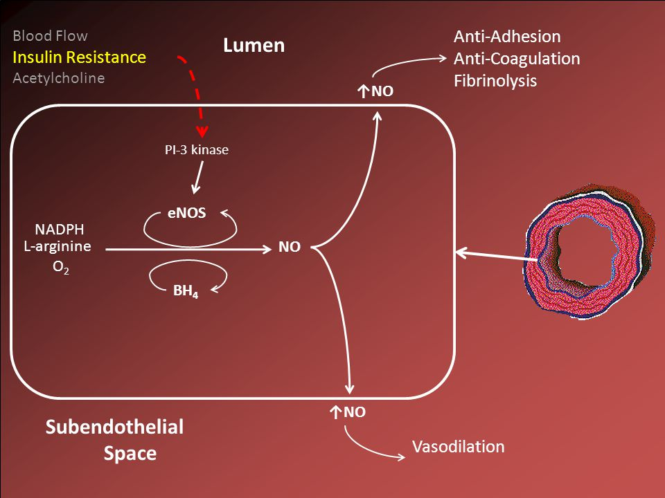 NO L-arginine O 2 NADPH Lumen ↑NO Subendothelial Space eNOS BH 4 PI-3 kinase Blood Flow Insulin Resistance Acetylcholine Anti-Adhesion Anti-Coagulation Fibrinolysis Vasodilation