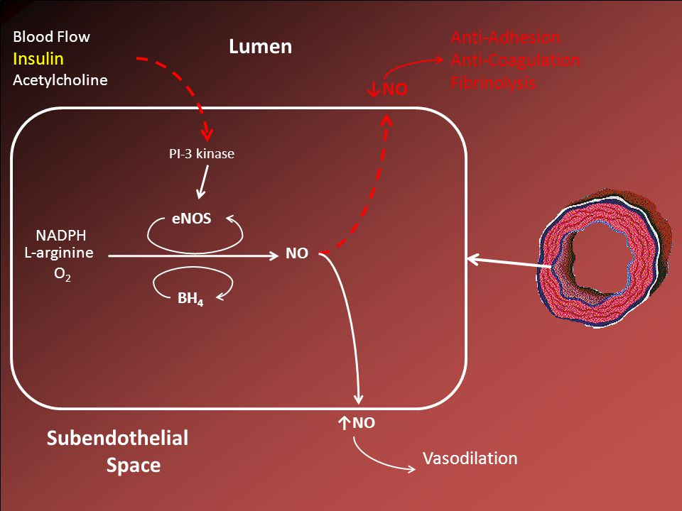 NO L-arginine O 2 NADPH Lumen Subendothelial Space eNOS BH 4 PI-3 kinase Blood Flow Insulin Acetylcholine ↓NO Anti-Adhesion Anti-Coagulation Fibrinolysis ↑NO Vasodilation