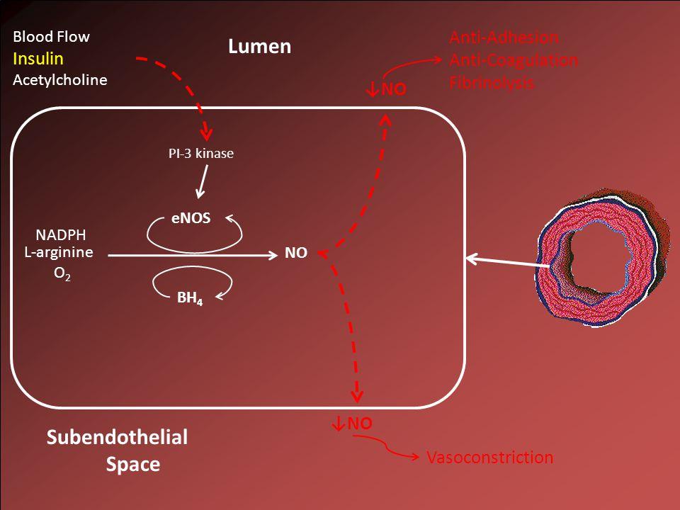 NO L-arginine O 2 NADPH Lumen Subendothelial Space eNOS BH 4 PI-3 kinase Blood Flow Insulin Acetylcholine ↓NO Anti-Adhesion Anti-Coagulation Fibrinolysis Vasoconstriction