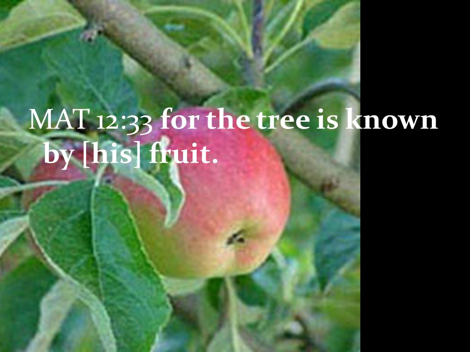 GAL 5:22 the fruit of the Spirit is love, joy, peace, longsuffering (patience), gentleness, goodness, faith, meekness, temperance
