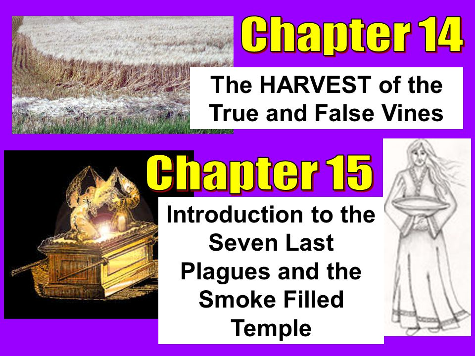 The HARVEST of the True and False Vines Introduction to the Seven Last Plagues and the Smoke Filled Temple