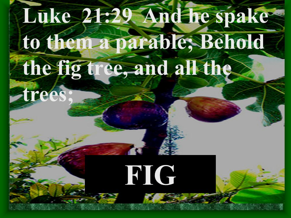 FIG Luke 21:29 And he spake to them a parable; Behold the fig tree, and all the trees;