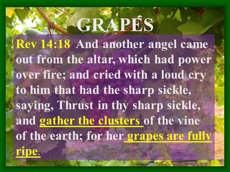 GRAPES Rev 14:18 And another angel came out from the altar, which had power over fire; and cried with a loud cry to him that had the sharp sickle, saying, Thrust in thy sharp sickle, and gather the clusters of the vine of the earth; for her grapes are fully ripe.