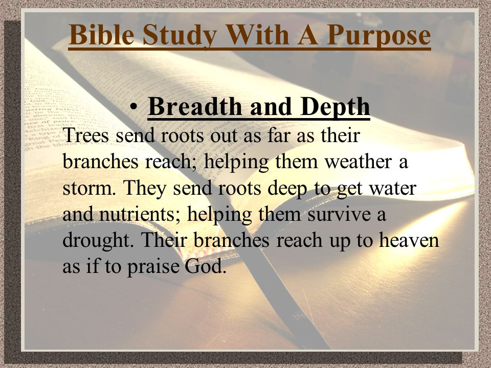 Bible Study With A Purpose Breadth and Depth Trees send roots out as far as their branches reach; helping them weather a storm.