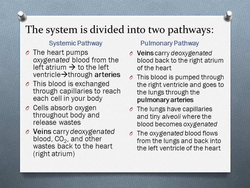 The system is divided into two pathways: Systemic Pathway Pulmonary Pathway O The heart pumps oxygenated blood from the left atrium  to the left vent