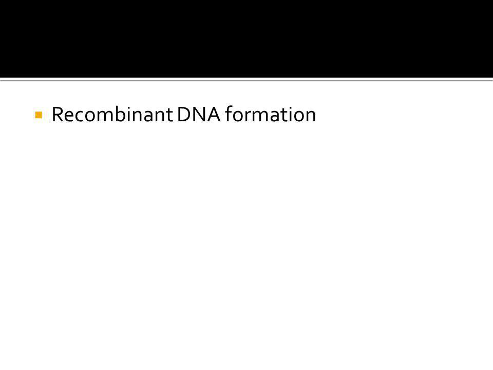  Recombinant DNA formation