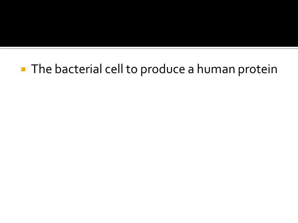  The bacterial cell to produce a human protein