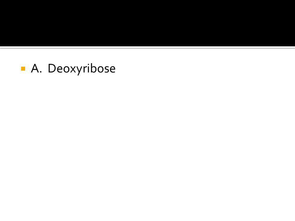  A. Deoxyribose