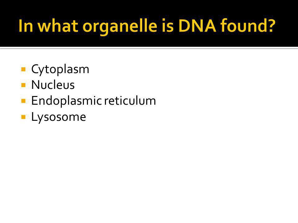  Cytoplasm  Nucleus  Endoplasmic reticulum  Lysosome