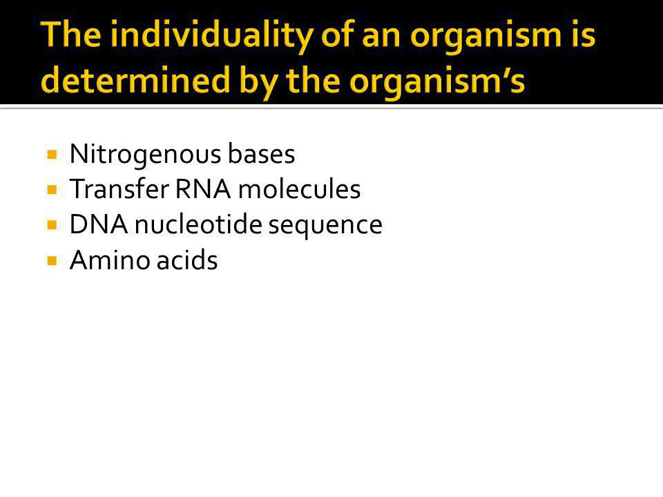  Nitrogenous bases  Transfer RNA molecules  DNA nucleotide sequence  Amino acids