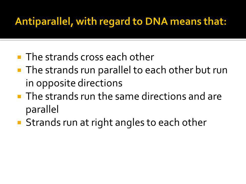  The strands cross each other  The strands run parallel to each other but run in opposite directions  The strands run the same directions and are p