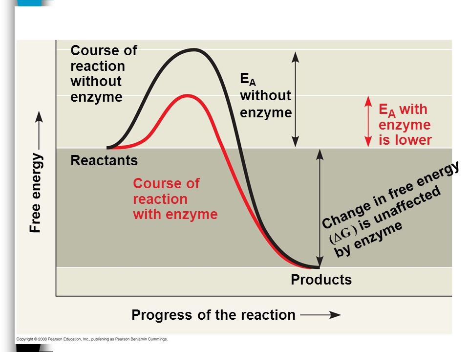 Progress of the reaction Products Reactants Change in free energy (∆G ) is unaffected by enzyme Course of reaction without enzyme Free energy E A with