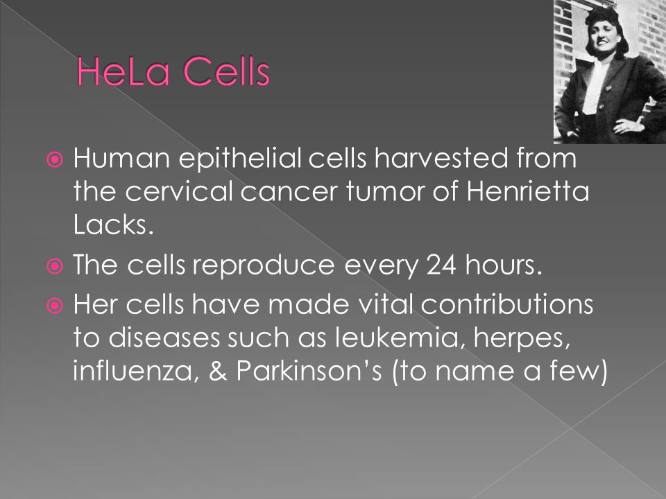  Human epithelial cells harvested from the cervical cancer tumor of Henrietta Lacks.