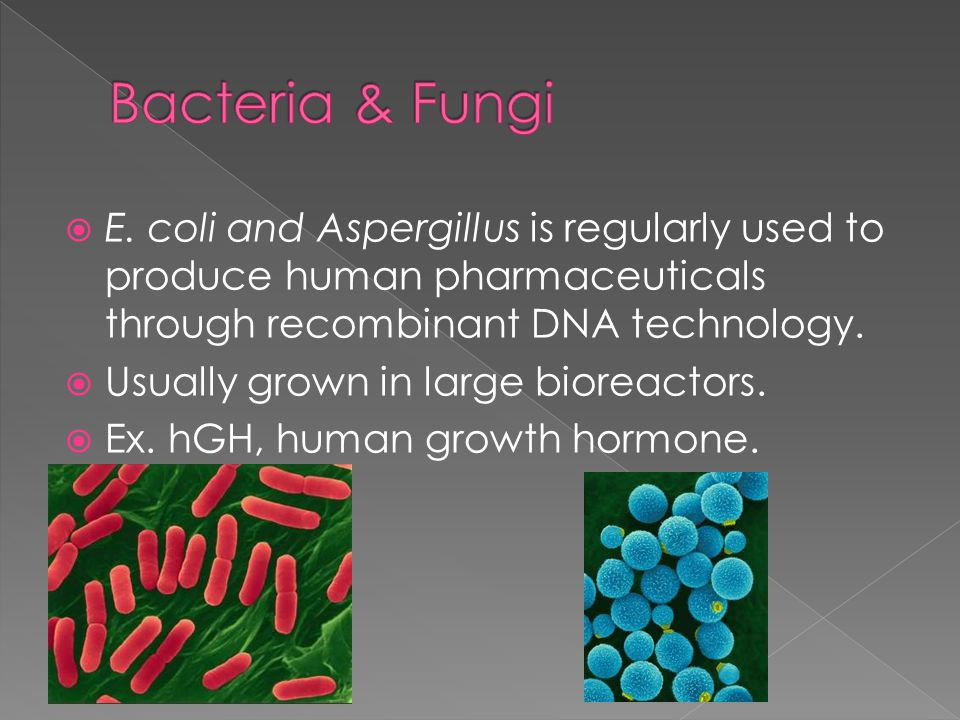 E. coli and Aspergillus is regularly used to produce human pharmaceuticals through recombinant DNA technology.  Usually grown in large bioreactors.