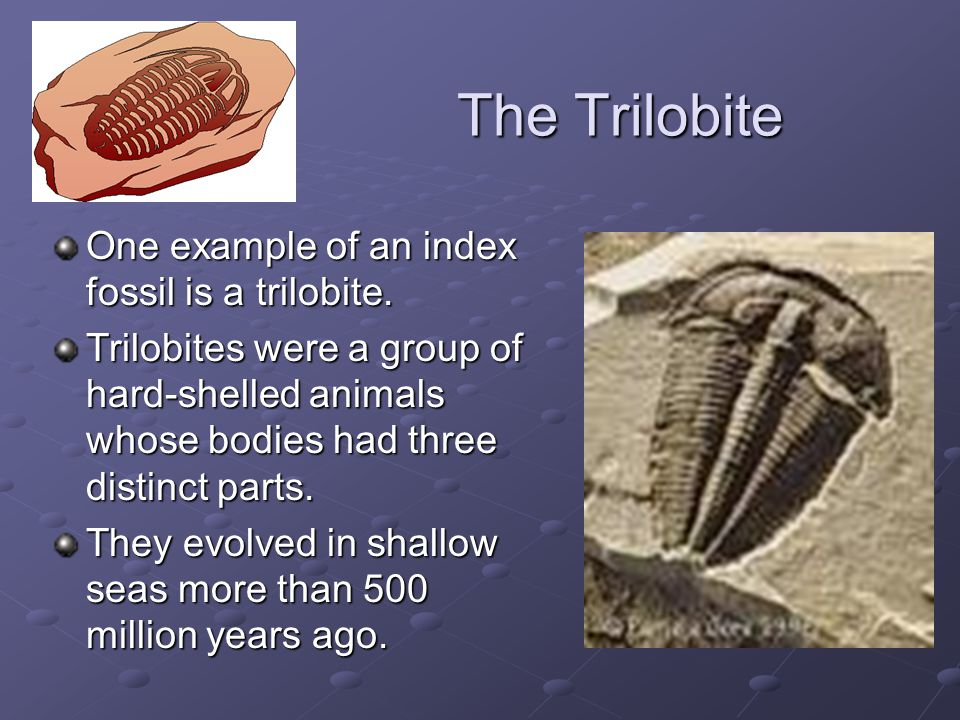 The Trilobite One example of an index fossil is a trilobite. Trilobites were a group of hard-shelled animals whose bodies had three distinct parts. Th