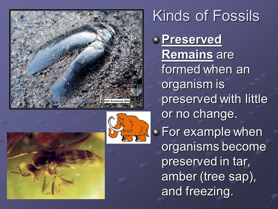 Kinds of Fossils Preserved Remains are formed when an organism is preserved with little or no change. For example when organisms become preserved in t
