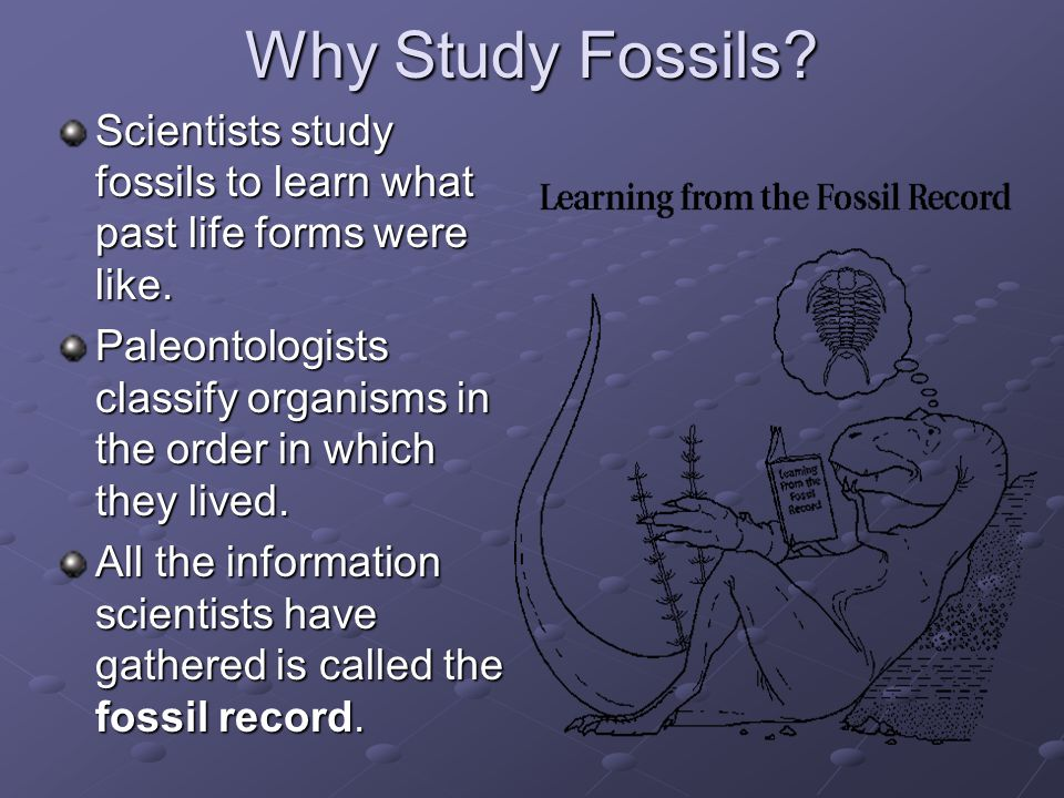 Why Study Fossils? Scientists study fossils to learn what past life forms were like. Paleontologists classify organisms in the order in which they liv