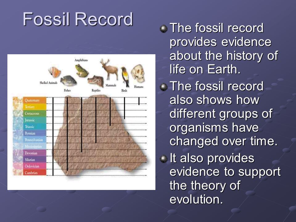 Fossil Record The fossil record provides evidence about the history of life on Earth. The fossil record also shows how different groups of organisms h