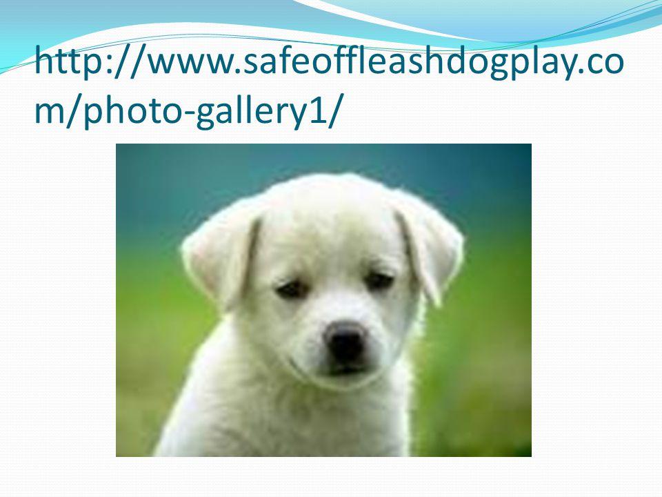 http://www.safeoffleashdogplay.co m/photo-gallery1/