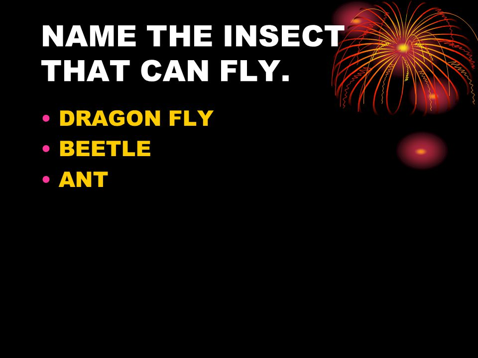 NAME THE INSECT THAT CAN FLY. DRAGON FLY BEETLE ANT
