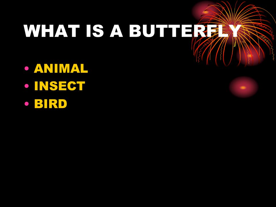 WHAT IS A BUTTERFLY ANIMAL INSECT BIRD