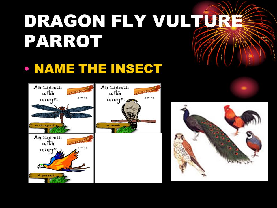 DRAGON FLY VULTURE PARROT NAME THE INSECT