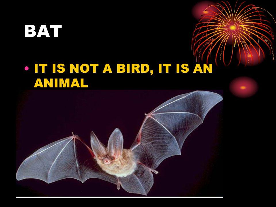 BAT IT IS NOT A BIRD, IT IS AN ANIMAL