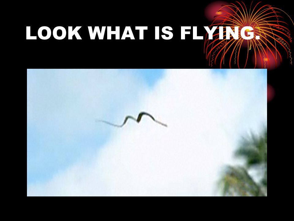 LOOK WHAT IS FLYING.