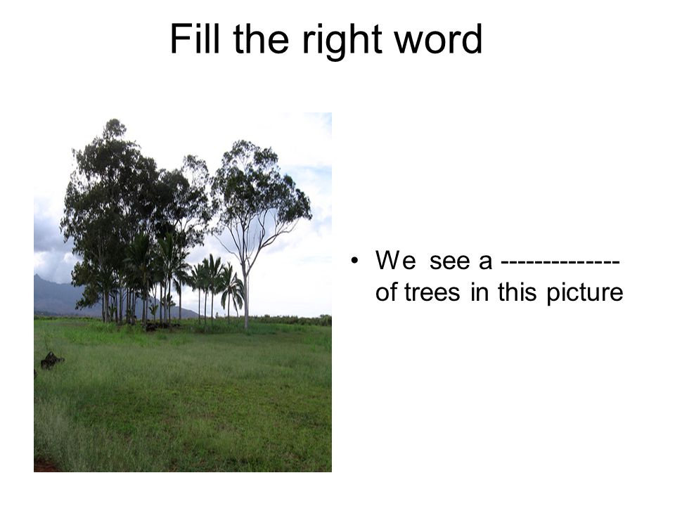 Fill the right word We see a -------------- of trees in this picture