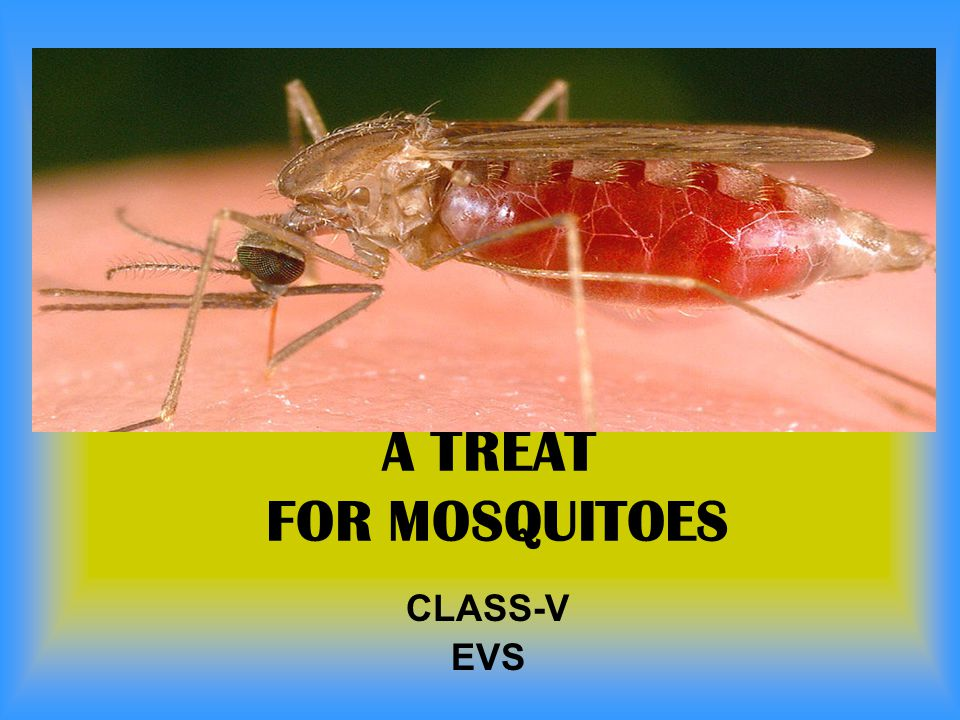A TREAT FOR MOSQUITOES CLASS-V EVS
