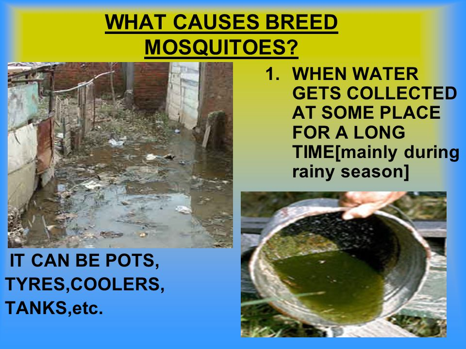 WHAT CAUSES BREED MOSQUITOES? IT CAN BE POTS, TYRES,COOLERS, TANKS,etc. 1.WHEN WATER GETS COLLECTED AT SOME PLACE FOR A LONG TIME[mainly during rainy