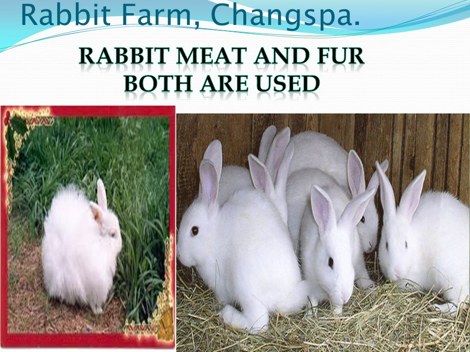 Rabbit Farm, Changspa.