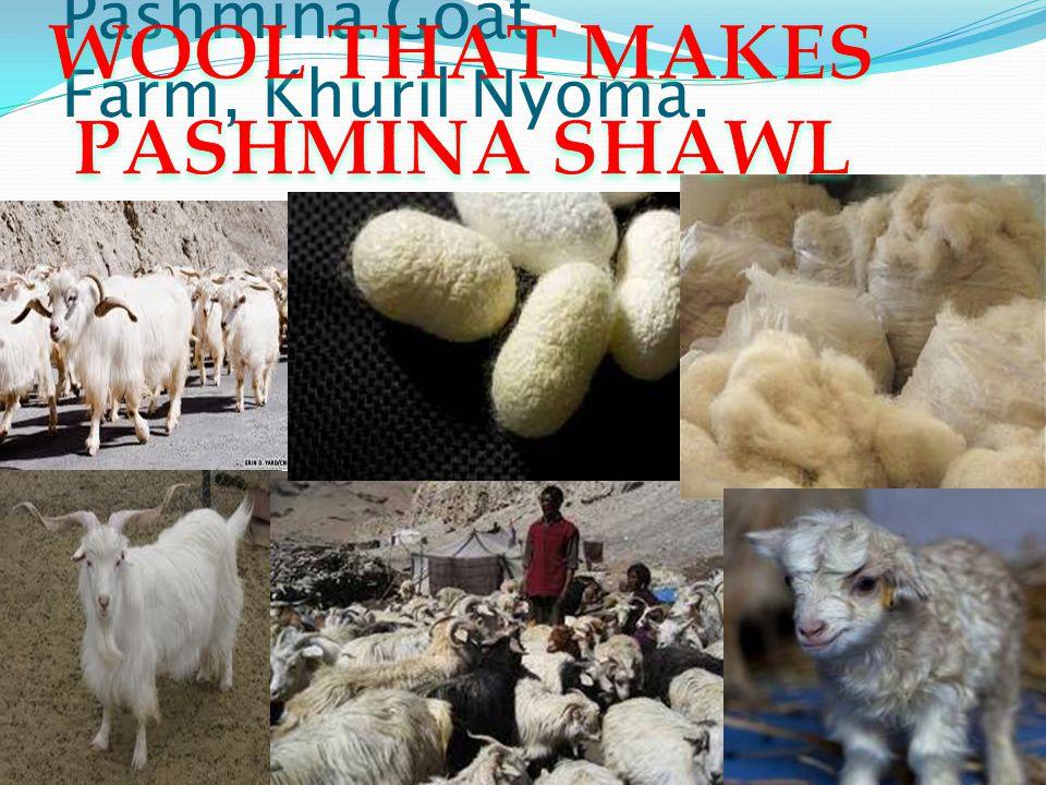 Pashmina Goat Farm, Khuril Nyoma.