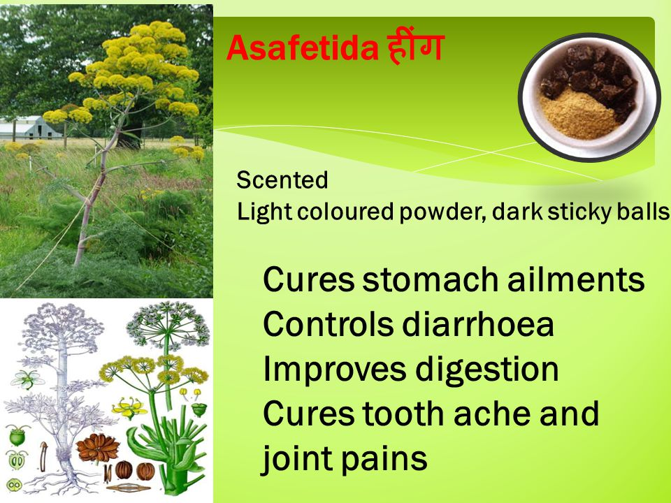 Asafetida हींग Scented Light coloured powder, dark sticky balls Cures stomach ailments Controls diarrhoea Improves digestion Cures tooth ache and joint pains
