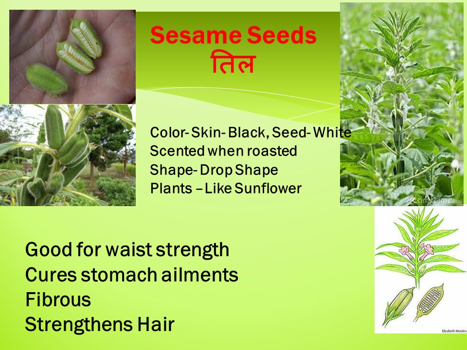 Sesame Seeds तिल Color- Skin- Black, Seed- White Scented when roasted Shape- Drop Shape Plants –Like Sunflower Good for waist strength Cures stomach ailments Fibrous Strengthens Hair