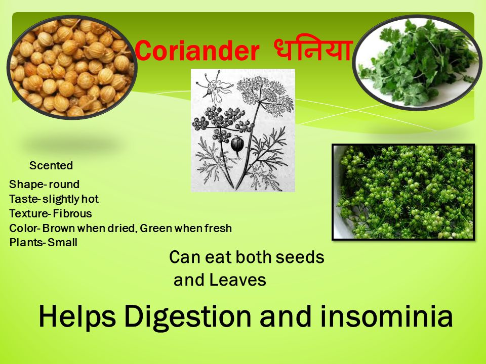 Coriander धनिया Shape- round Taste- slightly hot Texture- Fibrous Color- Brown when dried, Green when fresh Plants- Small Can eat both seeds and Leaves Helps Digestion and insominia Scented