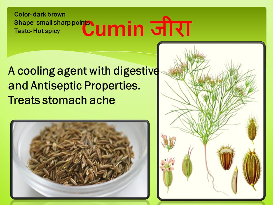 Cumin जीरा Color- dark brown Shape- small sharp points Taste- Hot spicy A cooling agent with digestive and Antiseptic Properties.