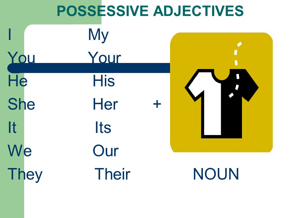 POSSESSIVE ADJECTIVES I My You Your He His She Her+ It Its We Our They Their NOUN