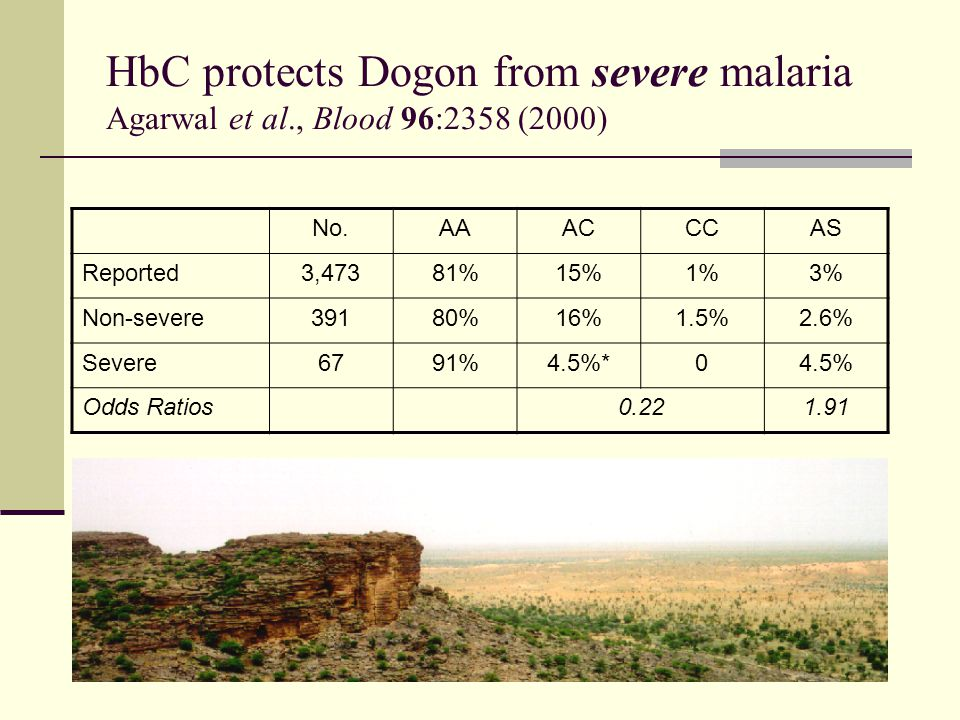 HbC protects Dogon from severe malaria Agarwal et al., Blood 96:2358 (2000) No.AAACCCAS Reported3,47381%15%1%3% Non-severe39180%16%1.5%2.6% Severe6791%4.5%*04.5% Odds Ratios0.221.91
