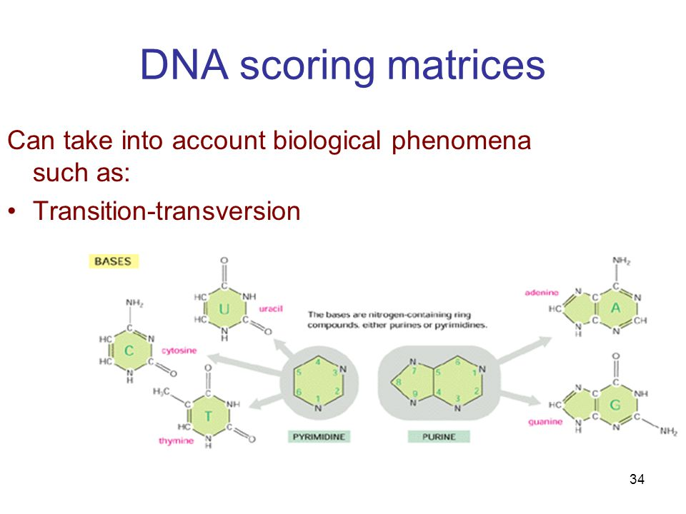 34 DNA scoring matrices Can take into account biological phenomena such as: Transition-transversion