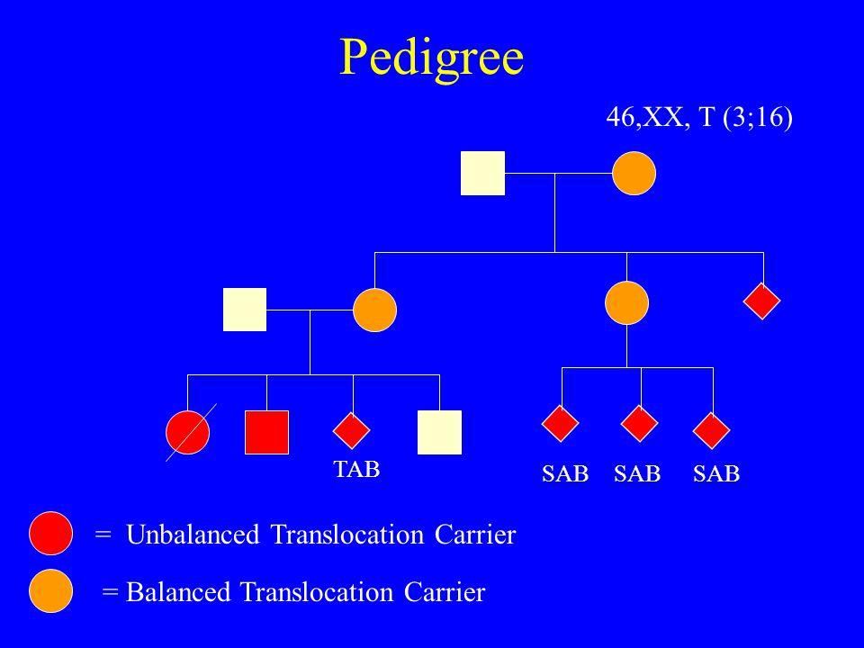 Pedigree TAB SAB = Unbalanced Translocation Carrier = Balanced Translocation Carrier 46,XX, T (3;16)