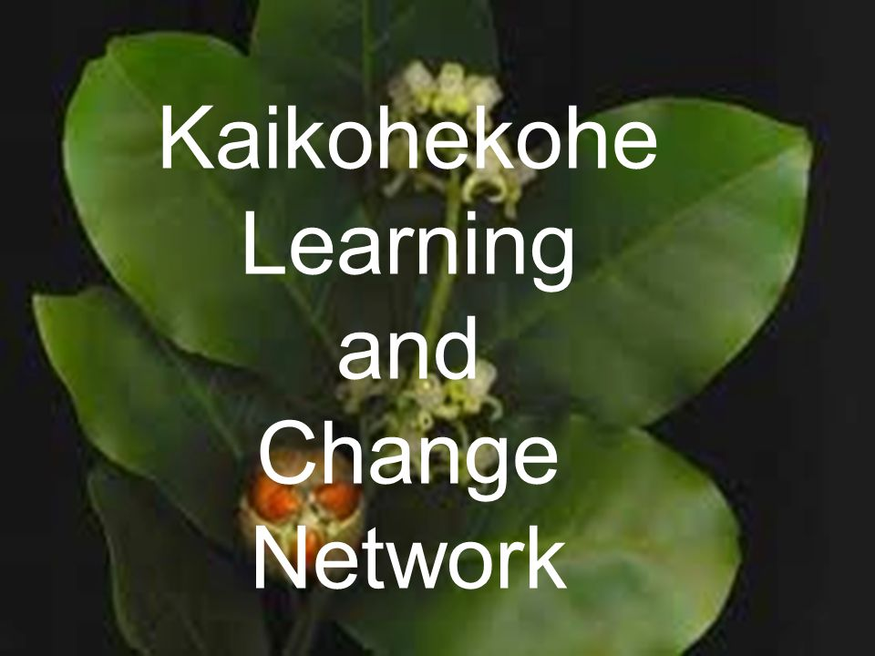 Kaikohekohe Learning and Change Network