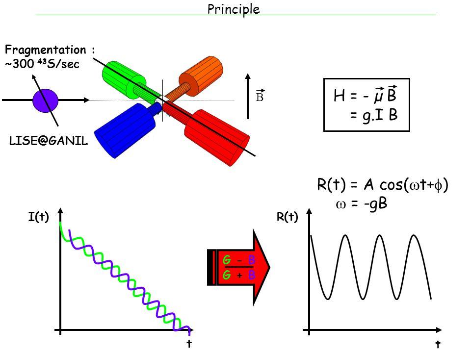 Principle Fragmentation : ~300 43 S/sec B t I(t) H = - µ B H = g.I B t R(t) G - B G + B R(t) = A cos(  t+  )  = -gB LISE@GANIL
