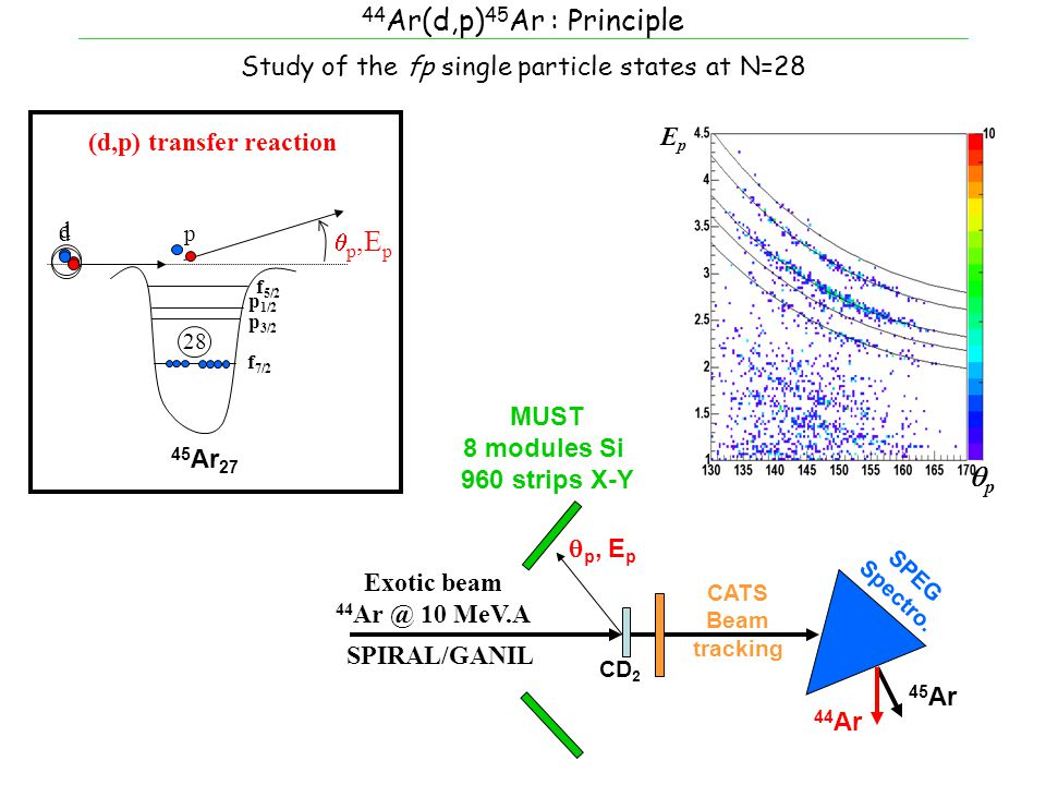 44 Ar(d,p) 45 Ar : Principle  p,E p d d 28 f 7/2 p 3/2 p 1/2 44 Ar 26 f 5/2 (d,p) transfer reaction 45 Ar 27 p Study of the fp single particle states at N=28 MUST 8 modules Si 960 strips X-Y Exotic beam 44 Ar @ 10 MeV.A SPIRAL/GANIL CD 2 CATS Beam tracking  p, E p SPEG Spectro.