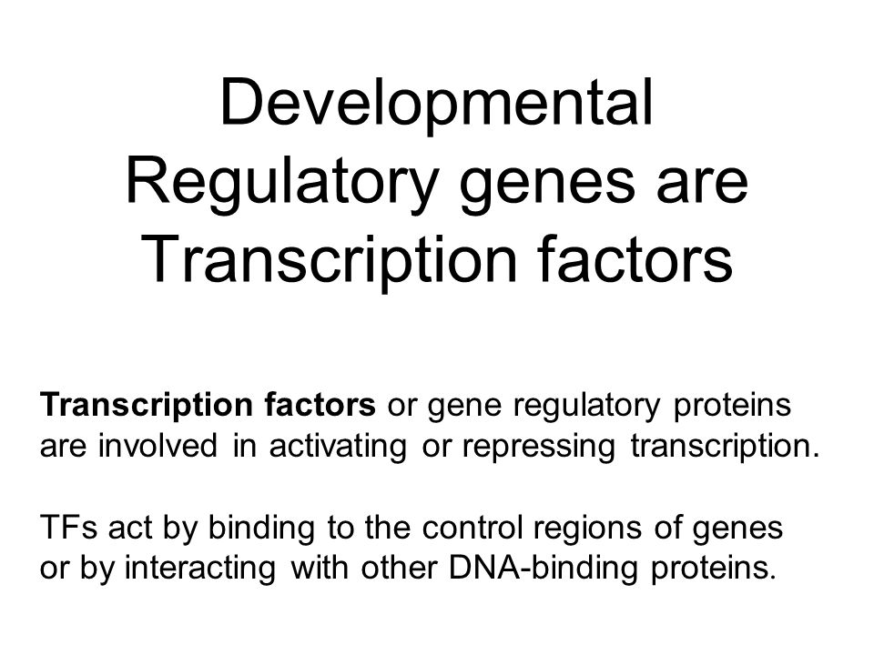 Developmental Regulatory genes are Transcription factors Transcription factors or gene regulatory proteins are involved in activating or repressing transcription.