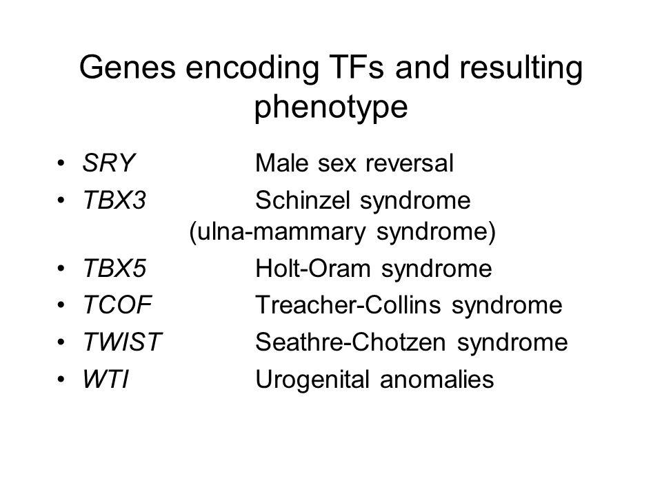 Genes encoding TFs and resulting phenotype SRYMale sex reversal TBX3Schinzel syndrome (ulna ‑ mammary syndrome) TBX5 Holt ‑ Oram syndrome TCOF Treacher ‑ Collins syndrome TWIST Seathre ‑ Chotzen syndrome WTI Urogenital anomalies
