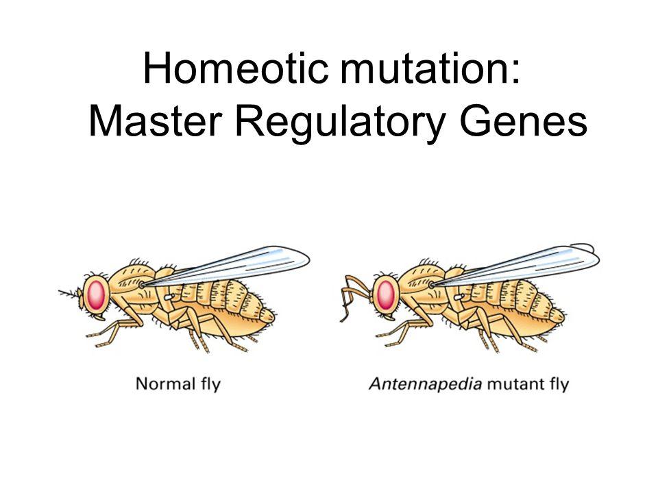 Homeotic mutation: Master Regulatory Genes