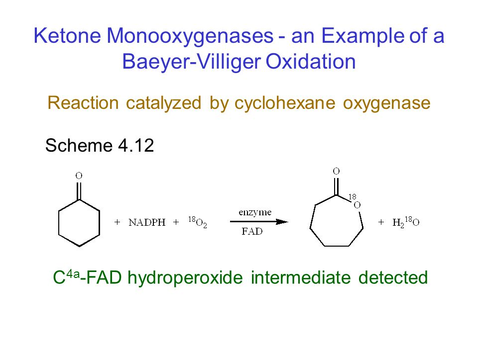 Scheme 4.12 Ketone Monooxygenases - an Example of a Baeyer-Villiger Oxidation C 4a -FAD hydroperoxide intermediate detected Reaction catalyzed by cycl
